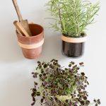 By WIRTH WALL BELT - lederen riem tbv plantenpotten